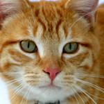 croquettes pour chat sterilise