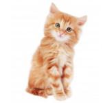 croquettes pour chaton husse