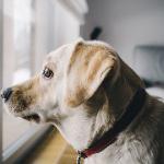 Croquettes light pour chien