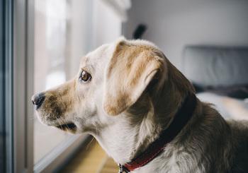 Les croquettes light pour chien