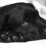 la constipation du chien
