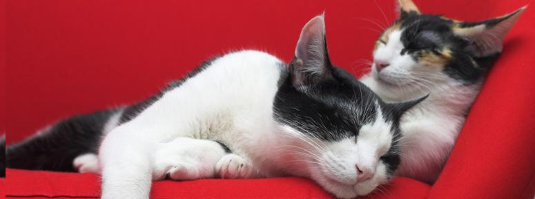 conseil-veterinaire-chat-interieur
