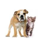 chien-chat-detoures