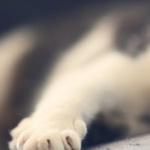 conseils-veterinaires