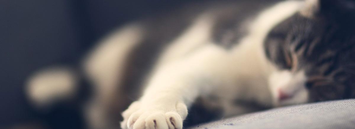 La santé du chat